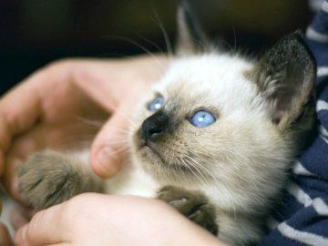 Come prepararsi all'arrivo di un gattino in casa