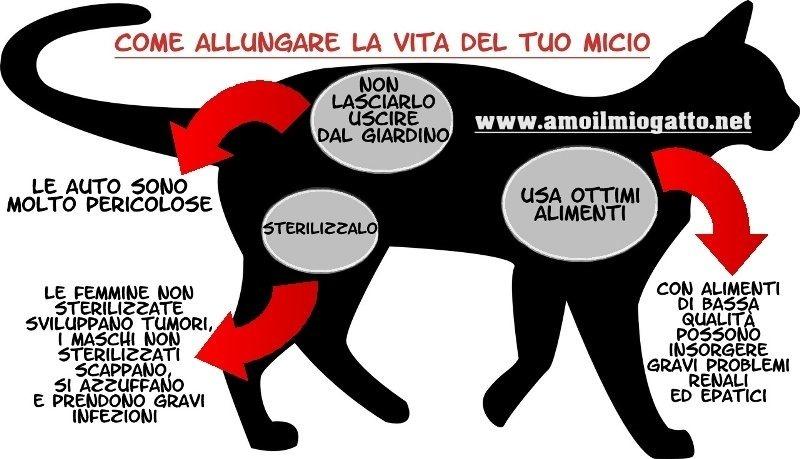 come allungare la vita del tuo gatto - infografica.bmp