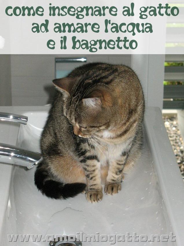 come insegnare al gatto ad amare l'acqua e il bagnetto