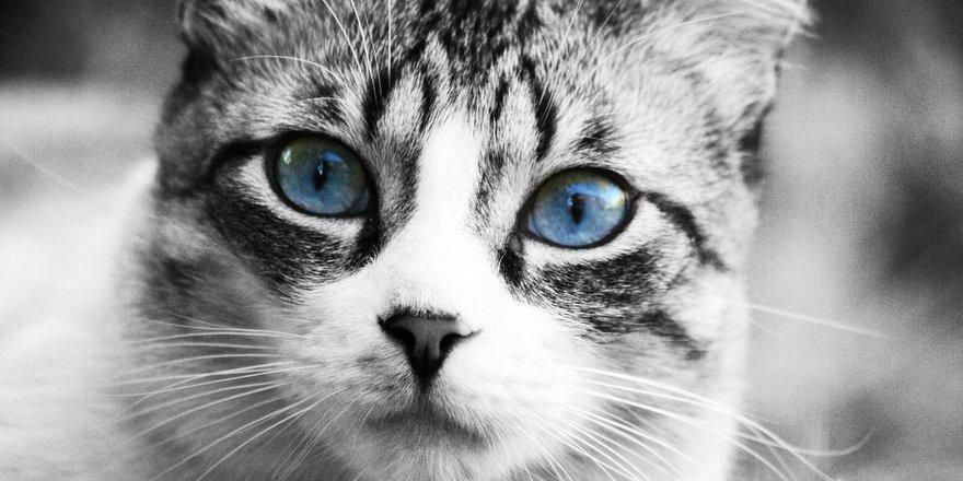 Amo il mio gatto il blog dedicato a chi ama i gatti - Come fare il bagno al gatto ...