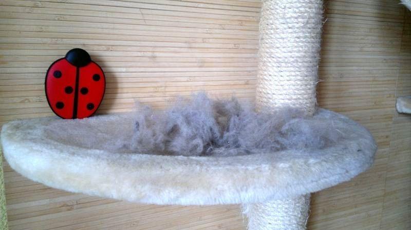 come togliere i peli di gatto da divano, tessuti e tappeti