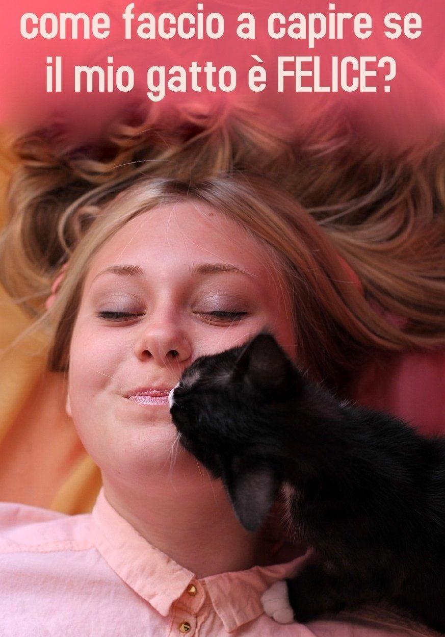 come faccio a capire se il mio gatto è felice