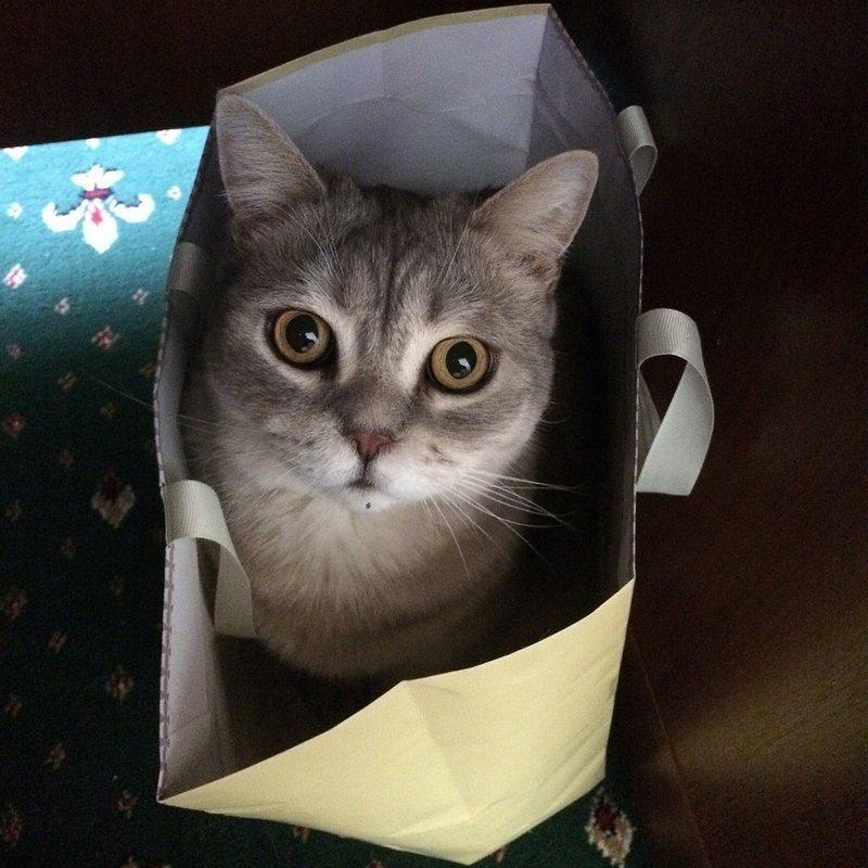 come organizzare la vacanza se hai un gatto