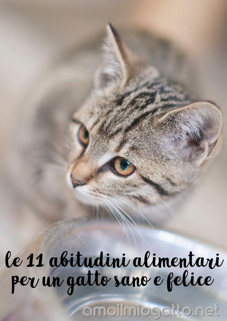 le 11 abitudini alimentari per un gatto sano e felice