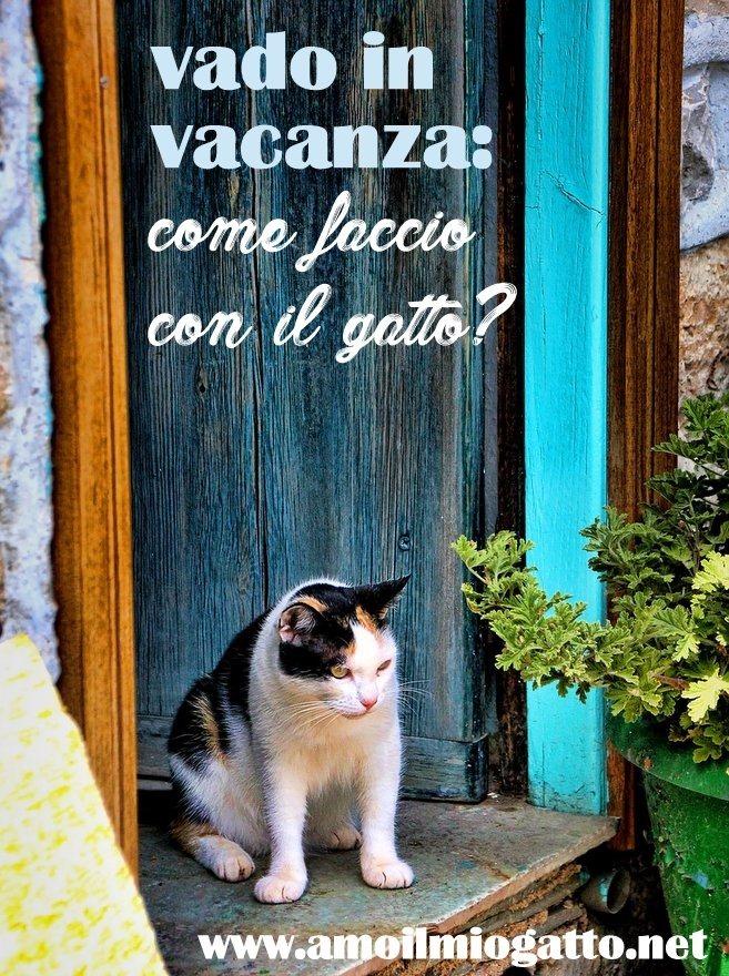 vado in vacanza - come faccio con il gatto